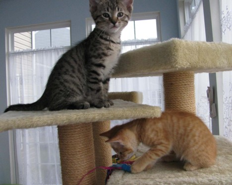 Mini masters of the cat tree
